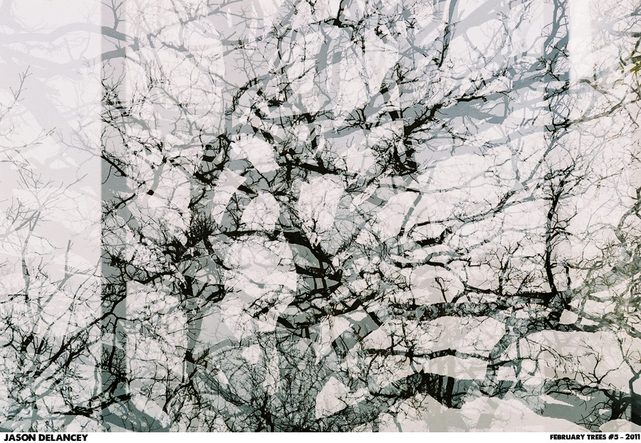 February Trees Number 5 - Jason DeLancey - C-Print, 2011