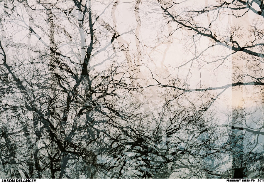 February Trees Number 6 - Jason DeLancey - C-Print, 2011